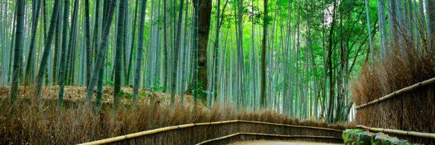 Les trois villes immanquables au Japon