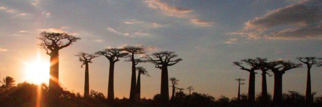 Morondava, une adresse de choix pour passer des vacances exceptionnelles