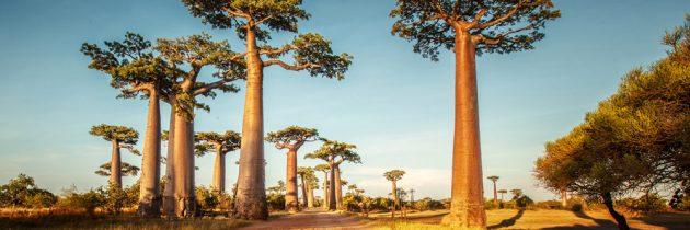 Souhaitez-vous avoir un accompagnateur pour votre voyage à Madagascar?