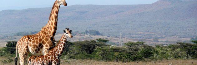 Le Kenya, une belle destination pour un voyage de dernière minute