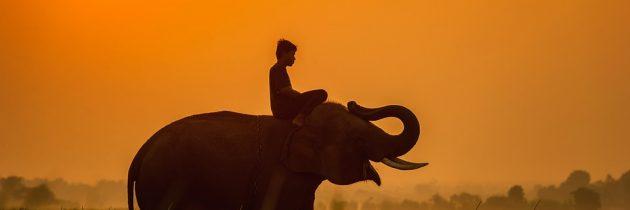 Quand faire du safari en Tanzanie ?