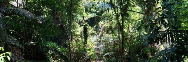 Le récit nostalgique d'un trek à Chiang Mai