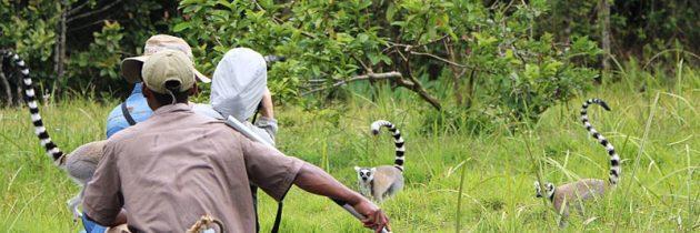 Visiter Madagascar autrement