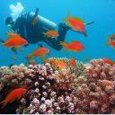 Plongée en Polynésie Française