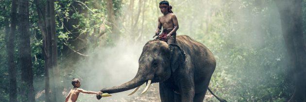 Quel thème choisir pour votre voyage sur mesure en Inde ?