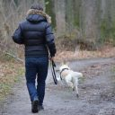 Comment organiser des vacances en famille avec un son chien ?